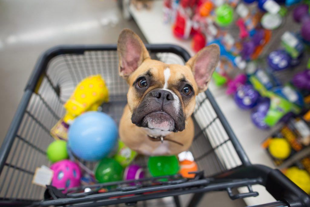 dog in shopping cart with toys 1024x683 - 4 passos para começar uma loja virtual de PetShop