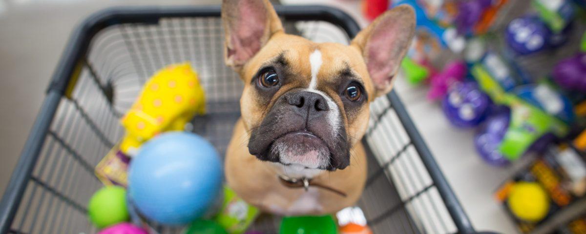 dog in shopping cart with toys 1200x480 - 4 passos para começar uma loja virtual de PetShop