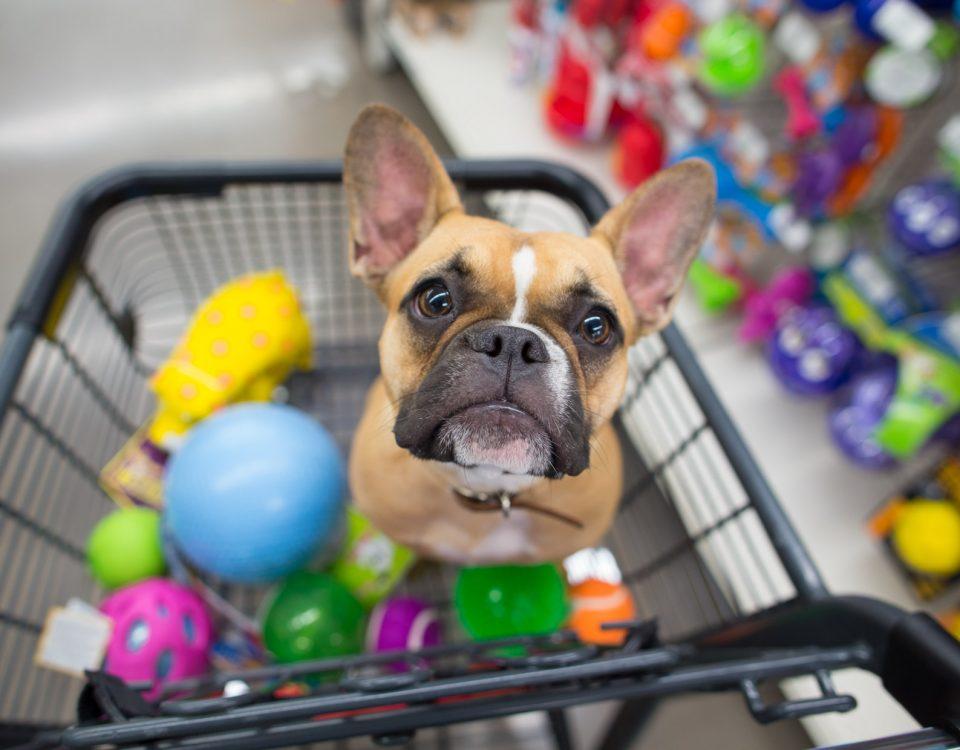 dog in shopping cart with toys 960x750 - 4 passos para começar uma loja virtual de PetShop